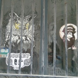 Monkey-Bird-animaux prison