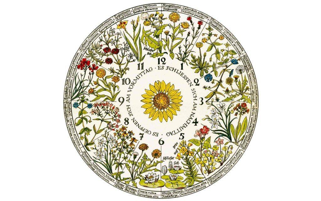 An-hourglass-of-scents---FRONT-PIC-(L'Horloge-Végétale-de-Car-von-Linné)
