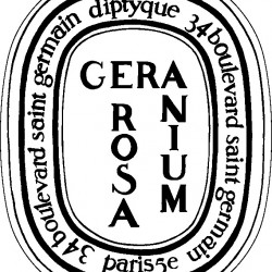 GERANIUM ROSA