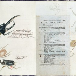 Carl von Linné. Systema naturæ per regna tria naturæ. Vienne, J. T. von Trattner, 1767-1770 – 2 vol. in-4o. BNF, Réserve des livres rares.