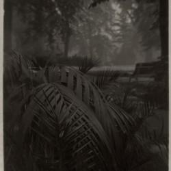 Josef Sudek, Le jardin royal, vers 1940–1946 procédé pigmentaire au papier charbon 16,1 × 11,7 cm Musée des beaux-arts du Canada, Ottawa Don anonyme, 2010 ©Succession de Josef Sudek