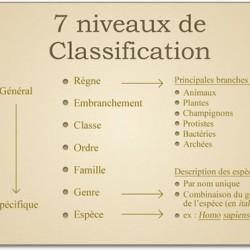 La classification linnéenne