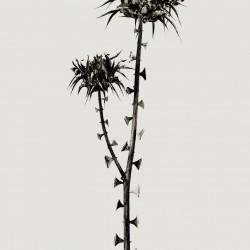 herbarium braohypoda, photographie de Joan Fontcuberta  (© Joan Fontcuberta)