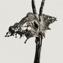 herbarium_dendrita, photographie de Joan Fontcuberta   (© Joan Fontcuberta)