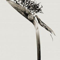 herbarium giliandria escoliforcia, photographie de Joan Fontcuberta (©Joan Fontcuberta)