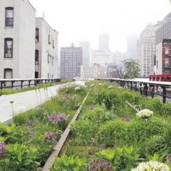 High Line à New York (Livre Planting: a new perspective, photography © Piet Oudolf)