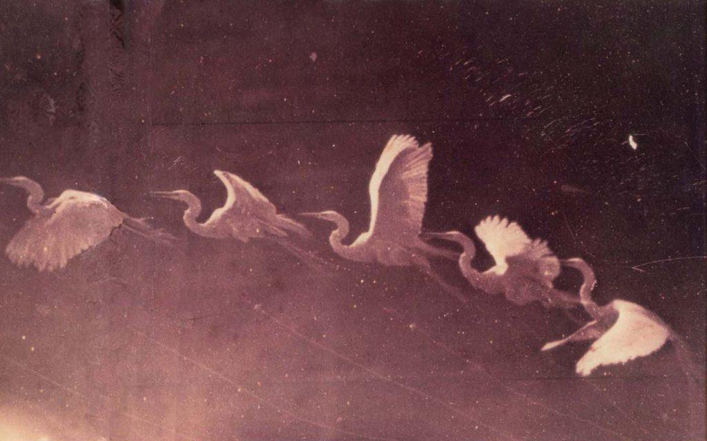 Etienne-Jules Marey (1830-1904) - chronophotographie d'un vol de héron