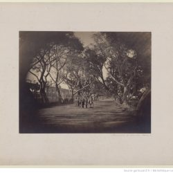 Gustave Le Gray (1813-1884) - Promenade_de_Choubra, Le Caire, 186?, Bibliothèque nationale de France, département Estampes et photographie