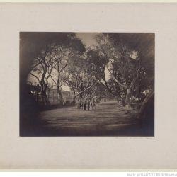 Gustave Le Gray (1813-1884) - Promenade_de_Choubra, Le Caire, 186?, Bibliothèque nationale de France, département Estampes et photographie