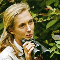 Jane Goodall in Gombe Stream National Park, circa 1965. (©The Jane Goodall Institute)